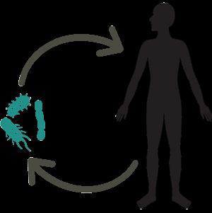 I batteri del microbiota intestinale vivono una convivenza benefica con il loro ospite.