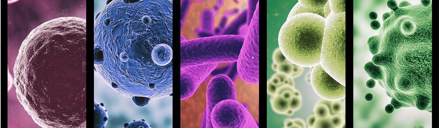 Il ruolo del microbiota intestinale