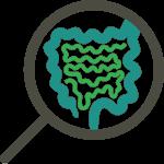 Il microbiota intestinale o flora batterica intestinale